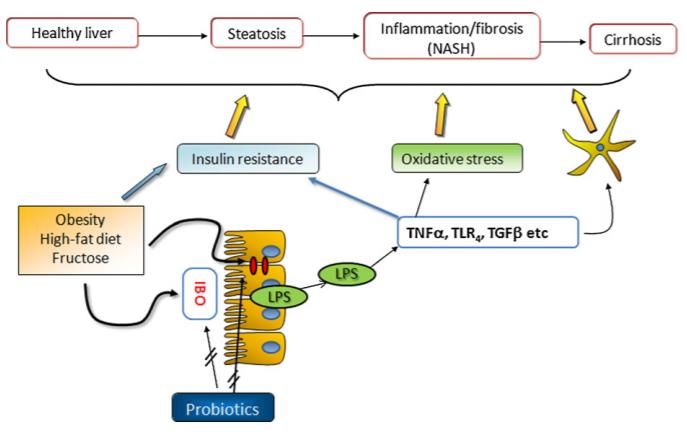 Sự dịch chuyển của vi khuẩn từ ruột vào gan